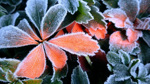 Greenery near road work, both fringed with frost and safety orange spray paint.