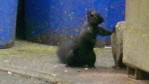 squirrel-moment-02