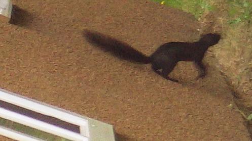 squirrel-stucco-03