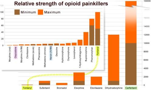opiate-comparison-morphine-to-carfentanil-02
