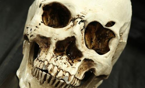 apple-skull-crop