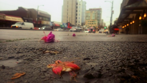 More flower fetals than cigarette butts littering the south sidewalk of 1400 West Broadway Ave.