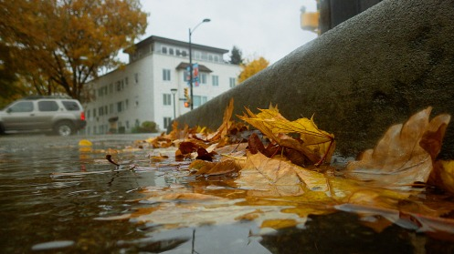 A wet curb-side gutter yesterday by Cambie Street and 17th Avenue.