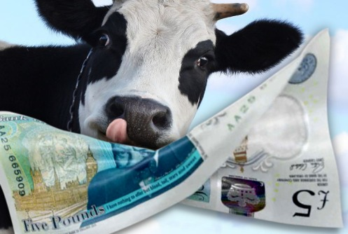 new-uk-fiver-with-cow